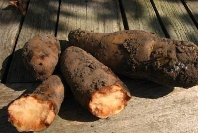 Cum își dai seama dacă cartoful dulce este stricat?