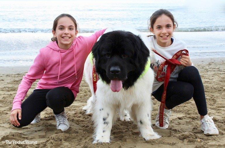 trainer cani eroi show 2017