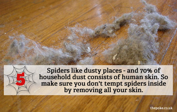 7 Easy Ways To Keep Spiders Out Of Your House The Poke