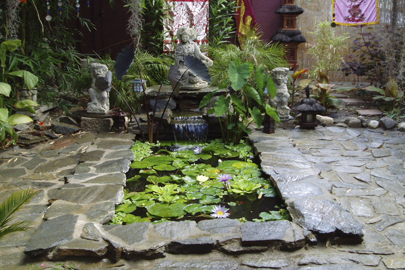Plants Small Fish Ponds