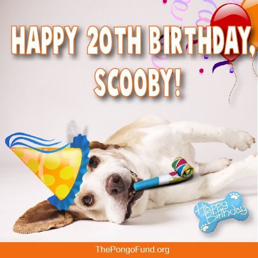 Happy 20th Birthday Scooby The Pongo Fund