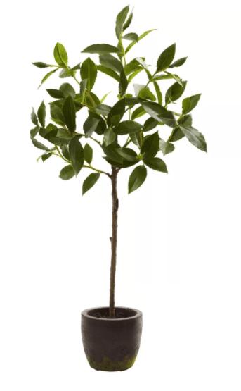 Topiary via Wayfair