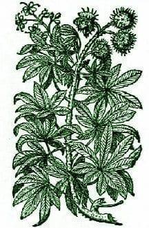 Horsechestnutgreen