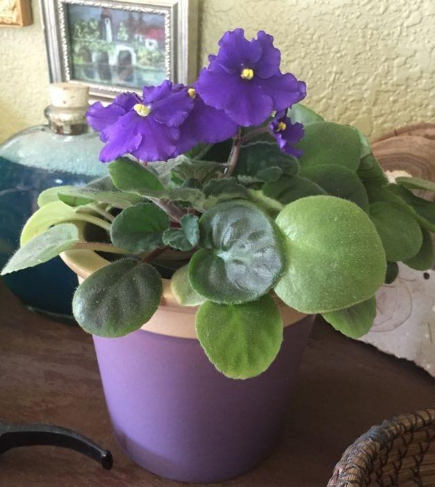 Tips For Indoor Gardening: 6 Tips For Indoor Gardening In Low Light Conditions