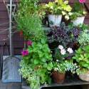 Show 90: Growing Herbs In Small Spaces With Bonnie Rose Weaver And Mari Amend