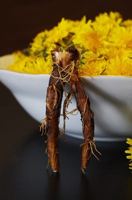 Inulin From Dandelion – How It Works