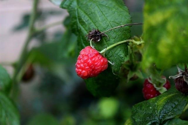 Raspberry, Blackberry: Energetics And Properties