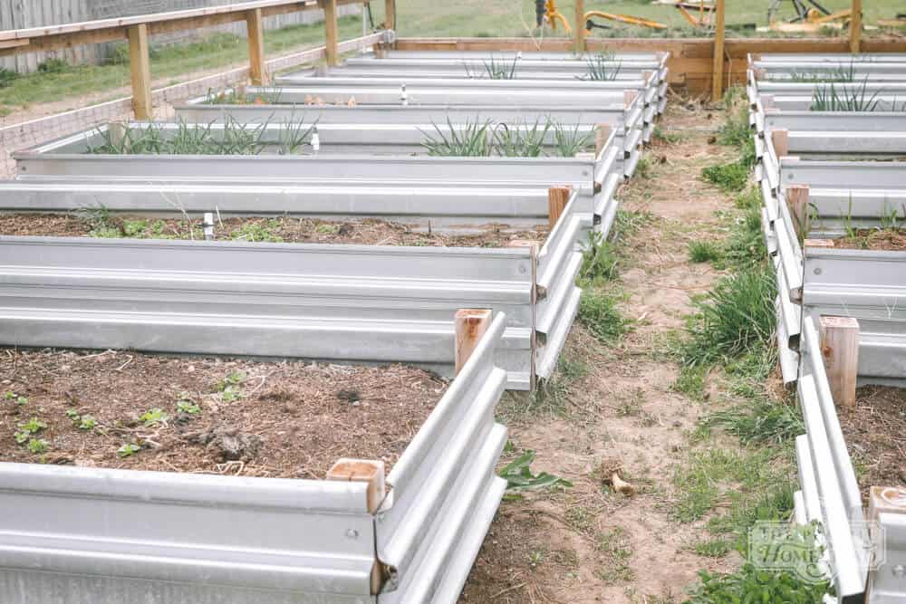 preparing raised beds spring