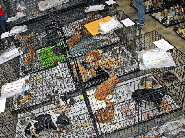 There are still pets that have no home from Katrina.