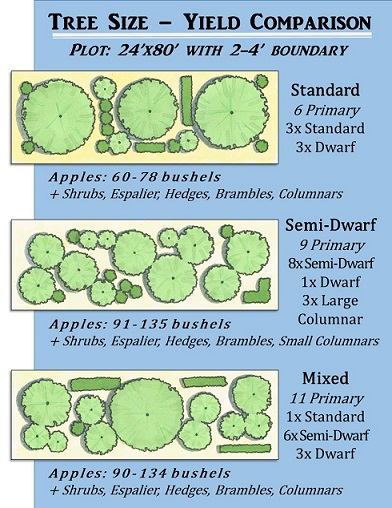 Graphic: Using a mix of semi-dwarf and dwarf trees can increase the total fruit yield in a space as well as create resiliency. *Yield estimates taken from Harried Homemaker Preps' compilation of Stark Bros. estimates.