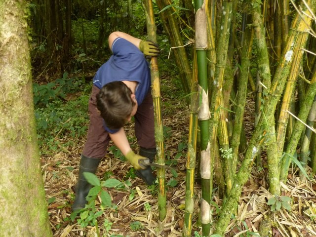 Bamboo – Nature's Gift to Preppers