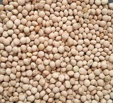 white fiofio for fiofio pigeon peas