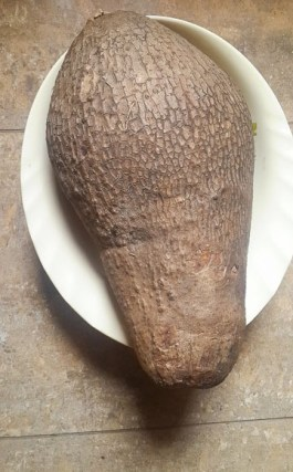 Tuber of water yam for ojojo water yam fritters