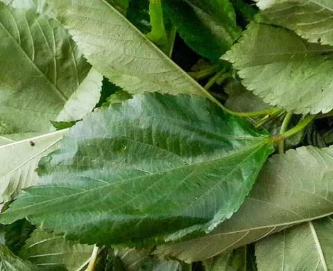 arirala for vegetable yam (ji akwukwo)