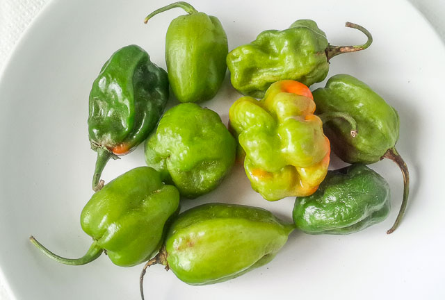 Scotch Bonnet, green