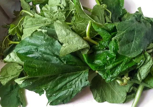 Ugbogoro leaf, bunch