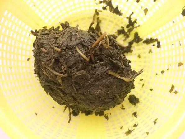 bitter-leaf-1-4