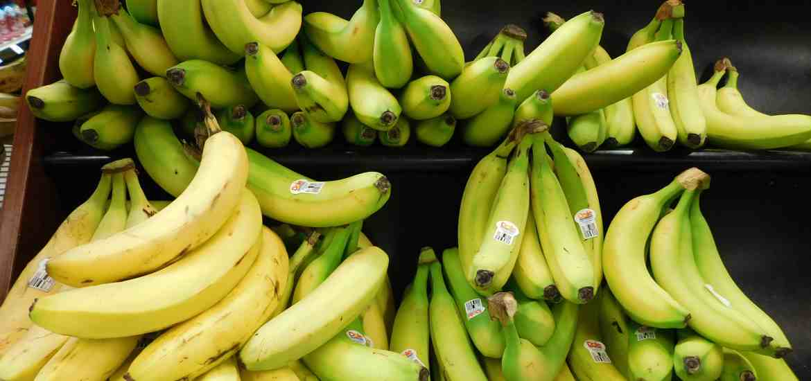Bananas at different ripening stages on a grocery display.