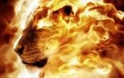 fire-lion-300x189