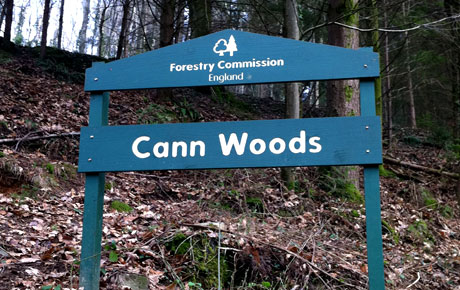 Image result for Cann Woods