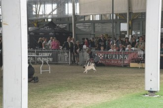 Sydney_Rotal_Dog_Show_The_Pug_Diary_03042015_0036