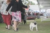 Sydney_Rotal_Dog_Show_The_Pug_Diary_03042015_0038