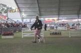 Sydney_Rotal_Dog_Show_The_Pug_Diary_03042015_0042