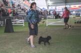 Sydney_Rotal_Dog_Show_The_Pug_Diary_03042015_0048