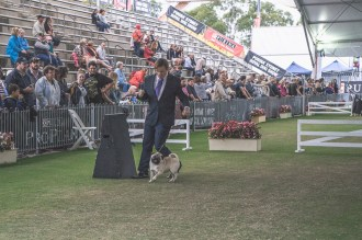 Sydney_Rotal_Dog_Show_The_Pug_Diary_03042015_0058