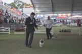 Sydney_Rotal_Dog_Show_The_Pug_Diary_03042015_0060