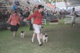 Sydney_Rotal_Dog_Show_The_Pug_Diary_03042015_0062
