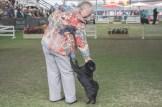 Sydney_Rotal_Dog_Show_The_Pug_Diary_03042015_0065