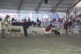 Sydney_Rotal_Dog_Show_The_Pug_Diary_03042015_0083