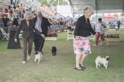 Sydney_Rotal_Dog_Show_The_Pug_Diary_03042015_0089