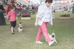 Sydney_Rotal_Dog_Show_The_Pug_Diary_03042015_0090