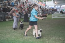Sydney_Rotal_Dog_Show_The_Pug_Diary_03042015_0093