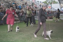 Sydney_Rotal_Dog_Show_The_Pug_Diary_03042015_0094