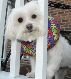 Puppy Bumper – Keep Your Dog on the Safe Side of the Fence -Jigsaw -up to 10″