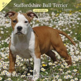 Magnet & Steel Staffordshire Bull Terrier Puppies Traditional Wall Calendar