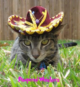 Sassy Sangria Miniature Sombrero for Cats and Dogs