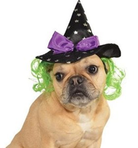 Rubies Costume Star Witch Hat with Hair Pet Accessory, Medium/Large