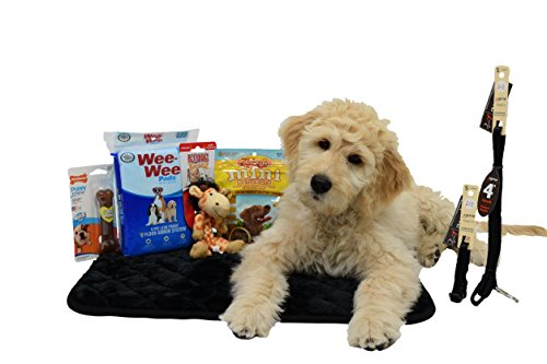 Puppy Starter Kit Bundle – Includes: Nylabone Chew Bone, Kong Braidz, Sleeping Bed, Wee Wee Pads, Lupine Leash, Lupine Collar, and Zuke's Naturals Mini Peanut Butter Treats!