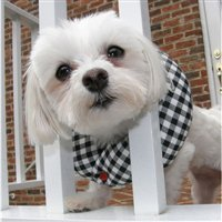 Puppy Bumper – Keep Your Dog on the Safe Side of the Fence – Black and White Check -10″-13″