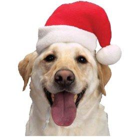 Aria Santa Dog Hats, Medium