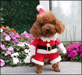 NACOCO Pet Christmas Costumes Dog Suit with Cap Santa Suit Dog Hoodies (Large)