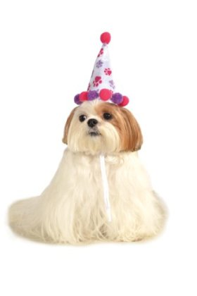Rubies Costume Halloween Classics Collection Pet Costume, Small to Medium, Purple and Red Paw Print Birthday Hat
