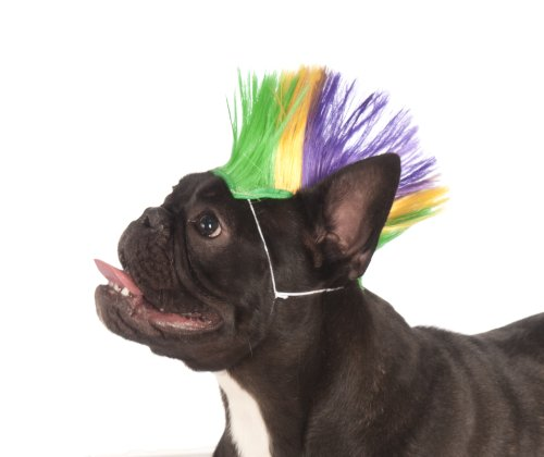 Rubies Costume Company Mardi Gras Pet Mohawk Wig, Small/Medium