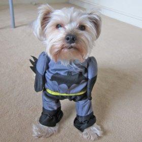 Alfie Pet by Petoga Couture – Superhero Costume Batman – Size: S