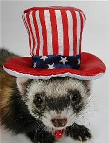 Marshall Ferret Cap, Uncle Sam