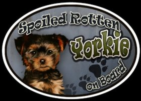 Yorkie Puppy – Spoiled Rotten Oval Dog Magnet for Cars